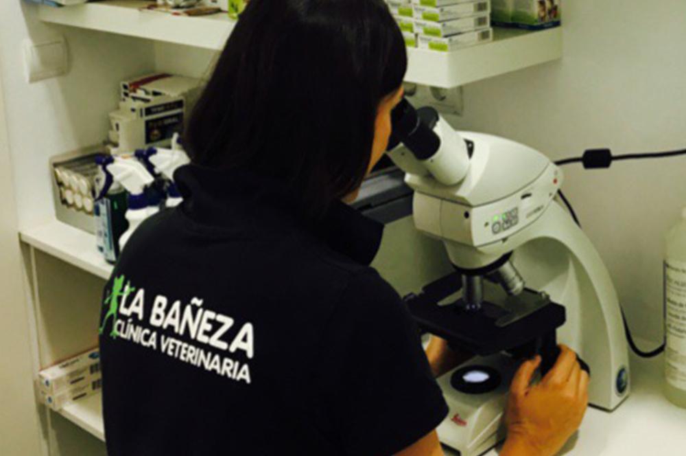 Laboratorio y analíticas | Clínica Veterinaria La Bañeza