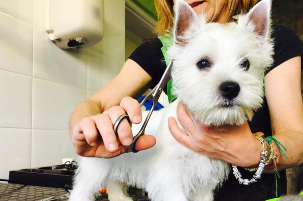 Peluquería canina y felina | Clínica Veterinaria La Bañeza